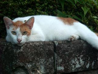 20100716cat