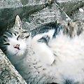 びくに猫&CW−X