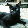 黒猫もビックリ!