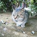 護国寺Cat