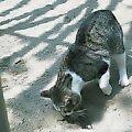 砂場を掘るネコ@江戸川公園