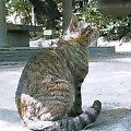 弁当を狙うネコ@江戸川公園